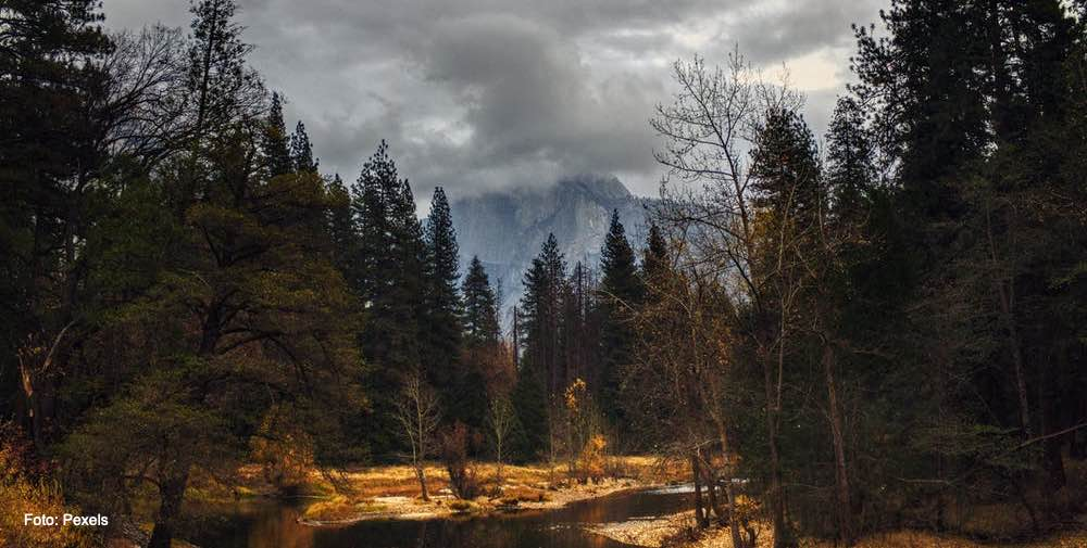 Yosemite One Tree Projekt Klimaschutz durch TENCEL ™